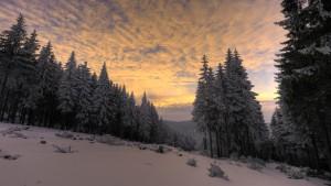 Der_Thüringer_Wald